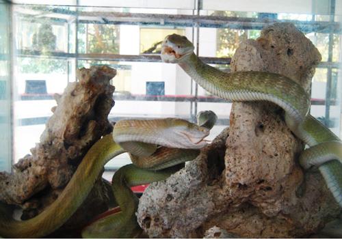 Thăm 'bảo tàng' rắn lớn nhất Việt Nam